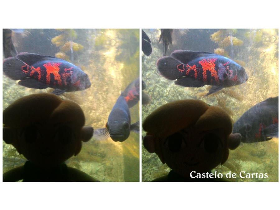 Fez algumas amizades com certos amigos peixes que vieram contar os segredos milenares do mundo deles.